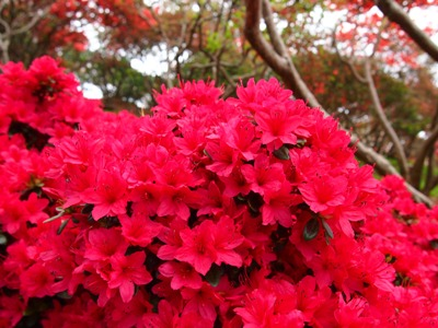 つつじ祭り_笠間_20120502_09_hp.jpg