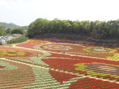 チューリップ祭_世羅高原農場_20110508_03_hp.jpg