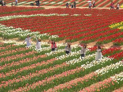 チューリップ祭_世羅高原農場_20110508_11_hp.jpg