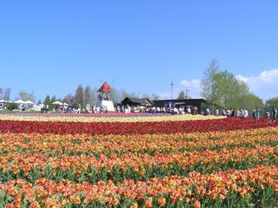 チューリップ祭_世羅高原農場_20110508_40_hp.jpg