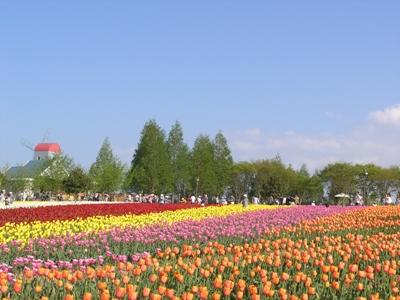 チューリップ祭_世羅高原農場_20110508_42_hp.jpg