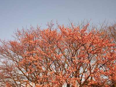 柏の葉公園_20150321_18_hp.jpg