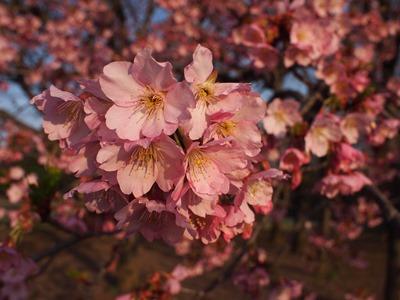 柏の葉公園_20150321_20_hp.jpg