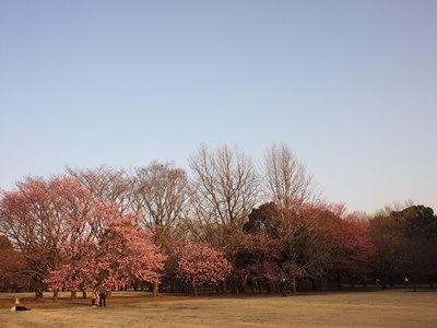 柏の葉公園_20150321_26_hp.jpg