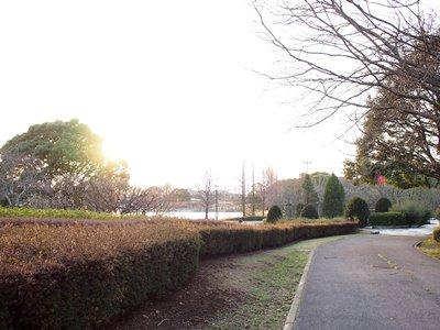 柏の葉公園_20150321_36_hp.jpg