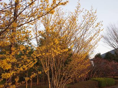 柏の葉公園_20150321_37_hp.jpg