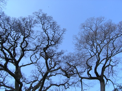 玉藻公園_20100321_21_hp.jpg