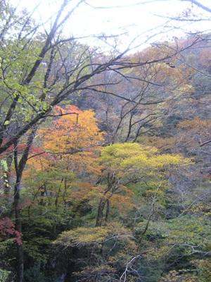 紅葉_帝釈峡_20101106_11_hp.jpg