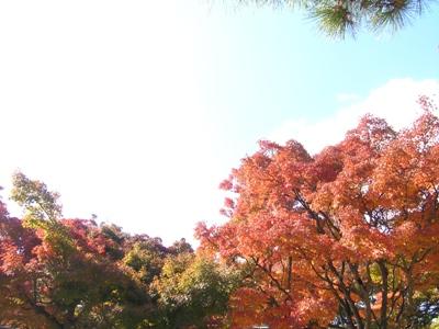 紅葉_耕三寺_20091123_18_hp.jpg
