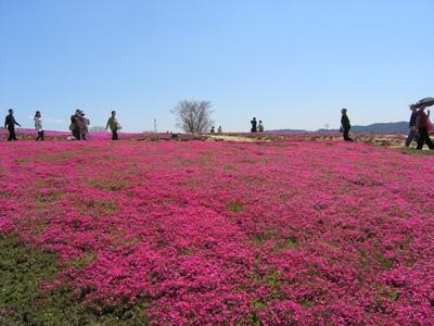 芝桜_花夢の里ロクタン_20100425_36_hp.jpg