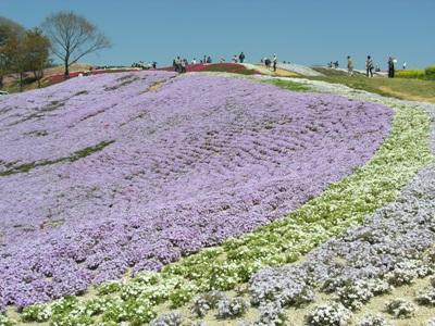 芝桜_花夢の里ロクタン_20100425_42_hp.jpg