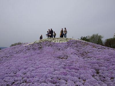芝桜_花夢の里ロクタン_20120429_118_hp.jpg