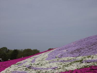 芝桜_花夢の里ロクタン_20120429_59_hp.jpg