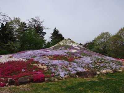 芝桜_花夢の里ロクタン_20120429_77_hp.jpg