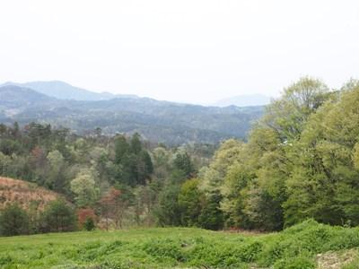 芝桜_花夢の里ロクタン_20120429_86_hp.jpg