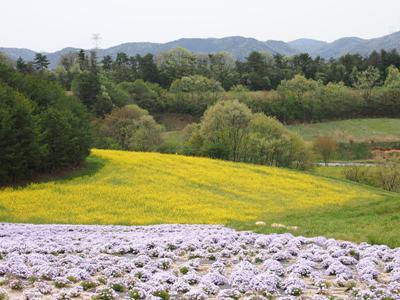 芝桜_花夢の里ロクタン_20120429_87_hp.jpg