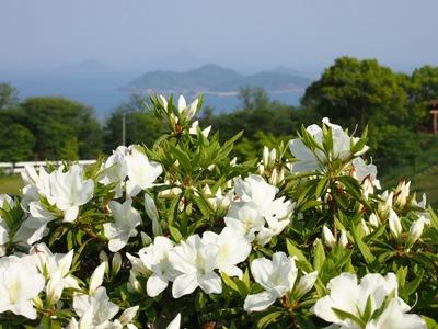 後山公園_20120505_04_hp.jpg