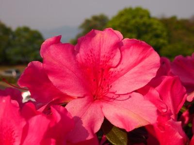 後山公園_20120505_28_hp.jpg
