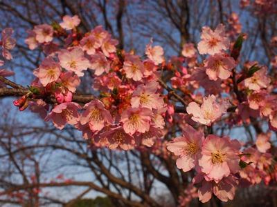 柏の葉公園_20150321_24_hp.jpg